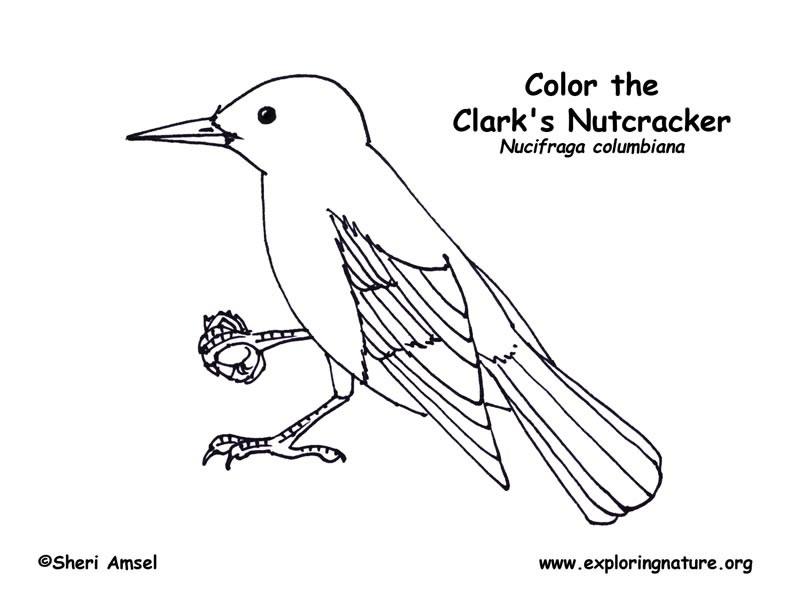 Clark\'s Nutcracker Coloring Page