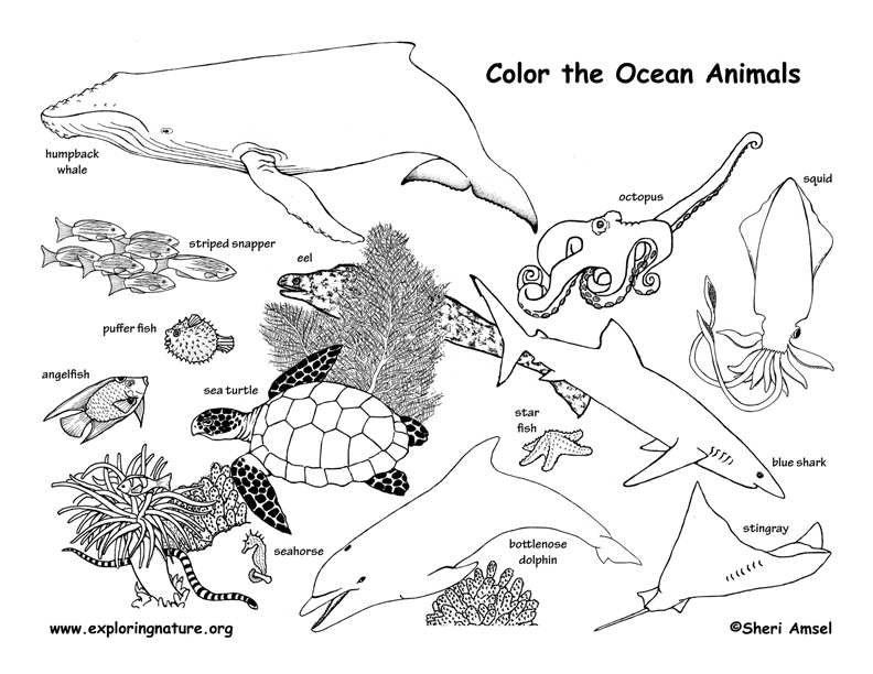 - Ocean Animals Coloring Page