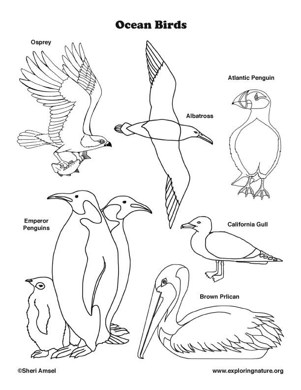 Ocean Birds Coloring Page