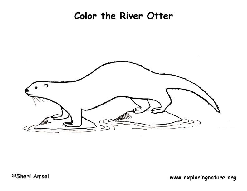 Otter River Coloring Page
