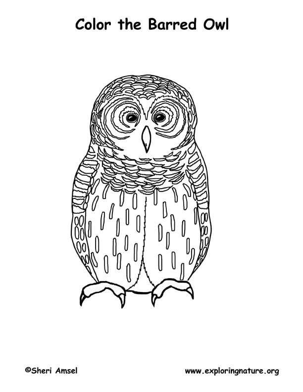 Owl (Barred) Coloring Page