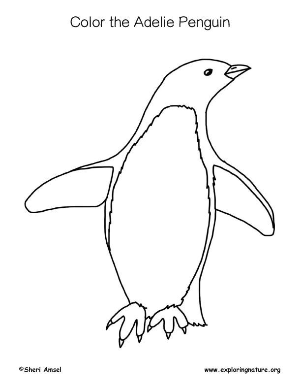 Panguin (Adelie) Coloring Page