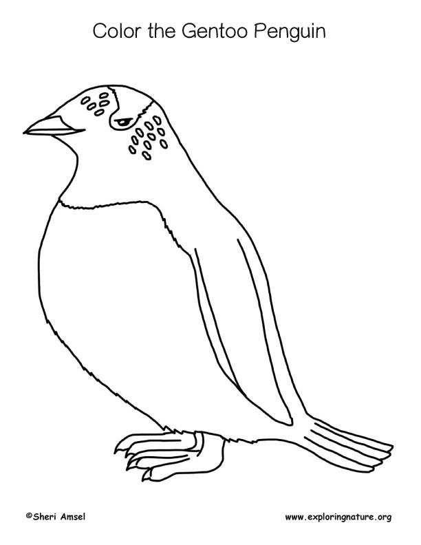 Penguin (Gentoo) Coloring Page