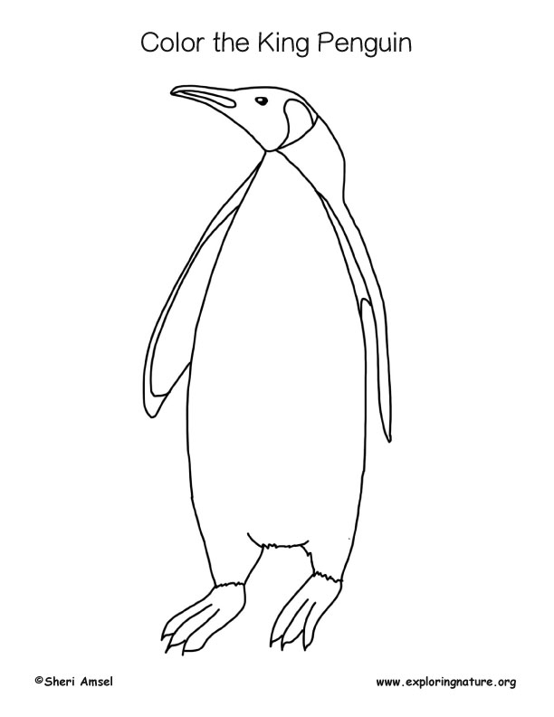 Penguin (King) Coloring Page