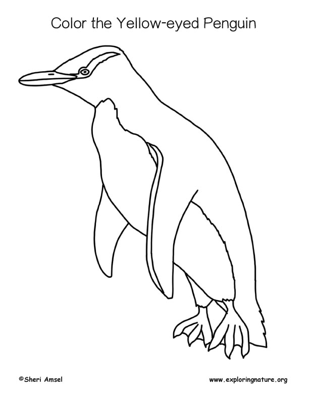 Penguin (Yellow-eyed) Coloring Page
