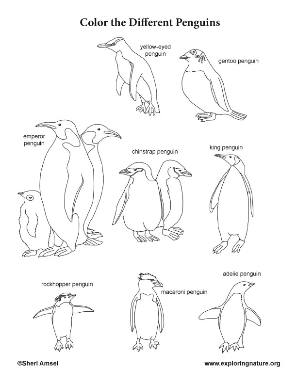 - Penguins Coloring Page