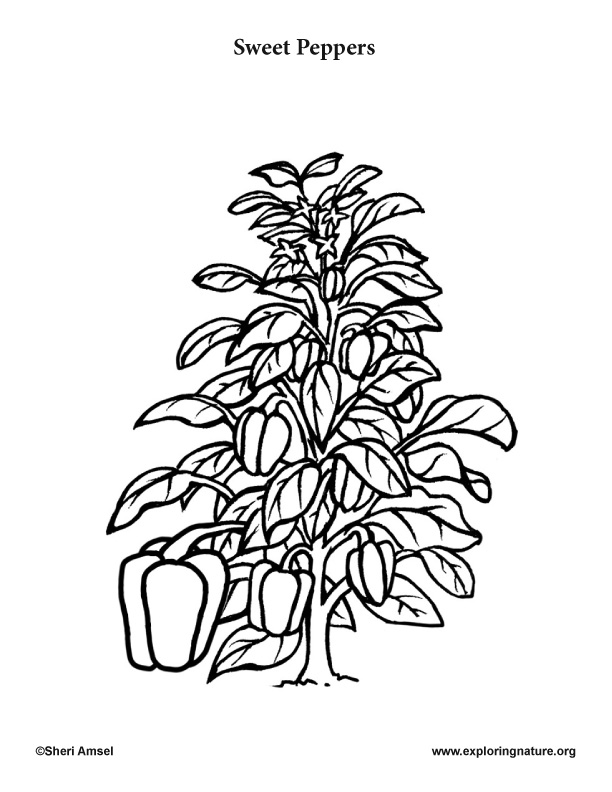 peppers coloring page