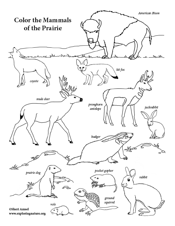 Mammals of the Prairie Coloring Page