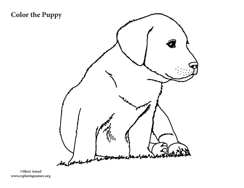 Puppy Coloring Page