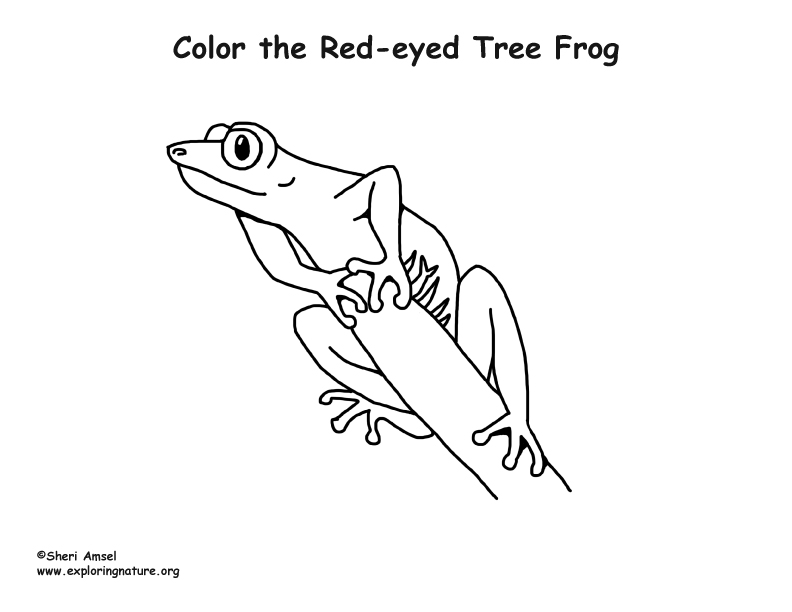 Red-Eyed Treefrog Coloring Page