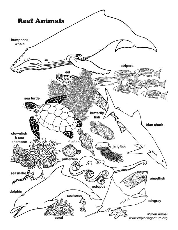 Reef Animals Coloring