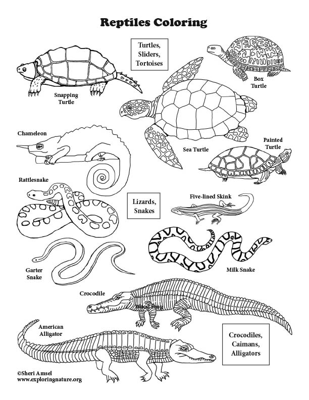 free reptile coloring pages - photo#17