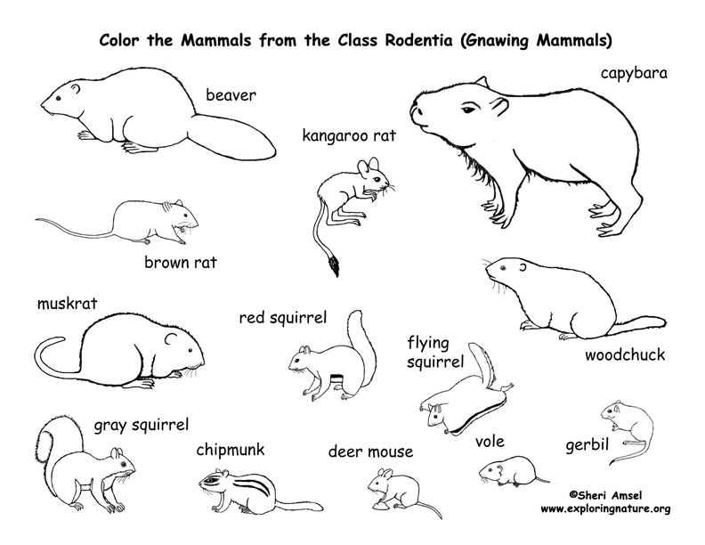 Rodents Coloring Page