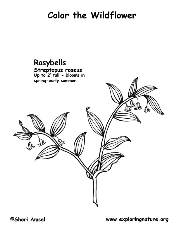 Rosy Bells Coloring Page
