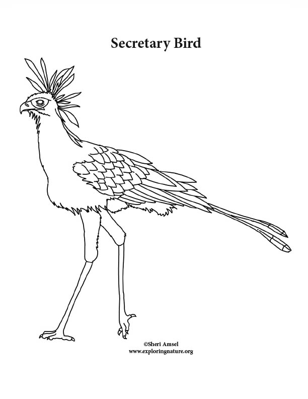 Secretary Bird Coloring Page