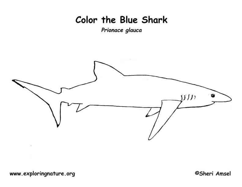 shark  blue  coloring page