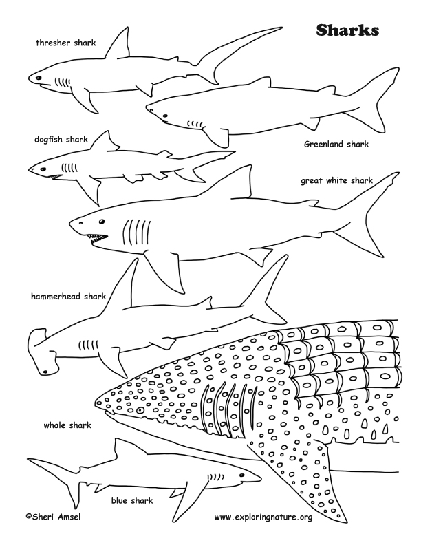 sharks coloring page - Shark Coloring Pages