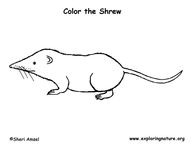 Long-tailed Shrew Coloring Page