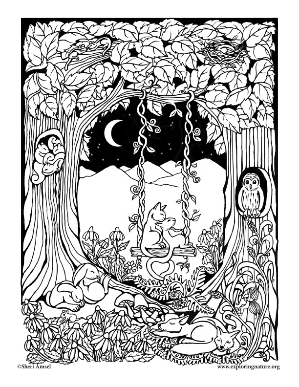 Adult coloring pages forest ~ Sleeping Forest Coloring Page