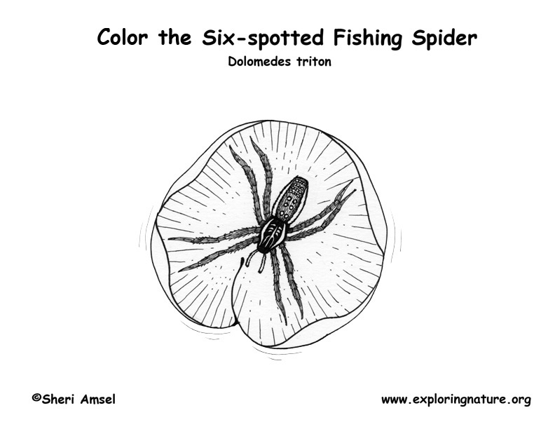 Spider (Fishing) Coloring Page