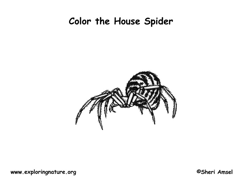 Spider (House) Coloring Page
