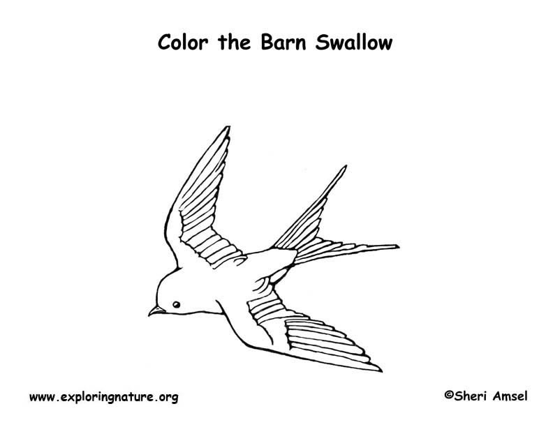 5600 Swallow Bird Coloring Pages Download Free Images