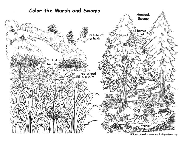 Mother Goose Nursery Rhymes Coloring Pages X moreover Sw  Marsh Coloring as well Tentazioni Di Ges C B additionally Wandering Albatross In Flight Coloring Page also Easter Sudoku Puzzle. on desert coloring pages preschool