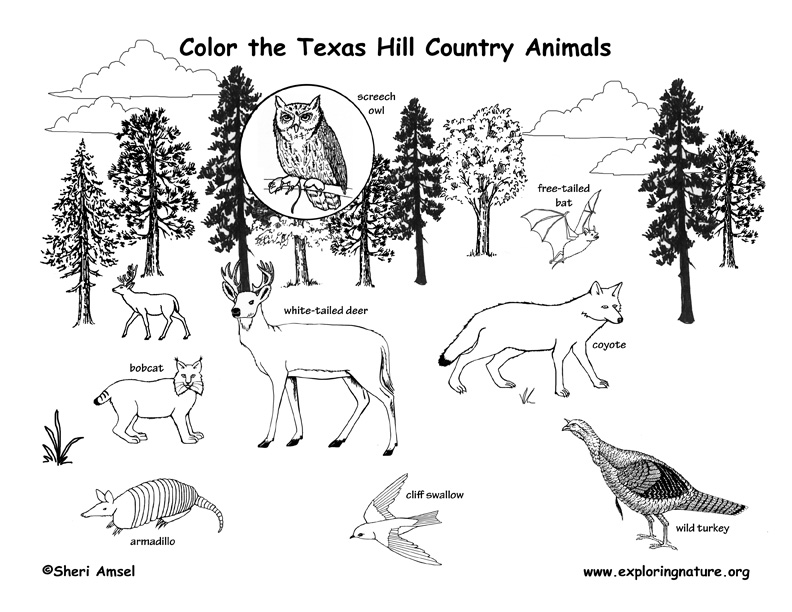 texas hill country coloring page