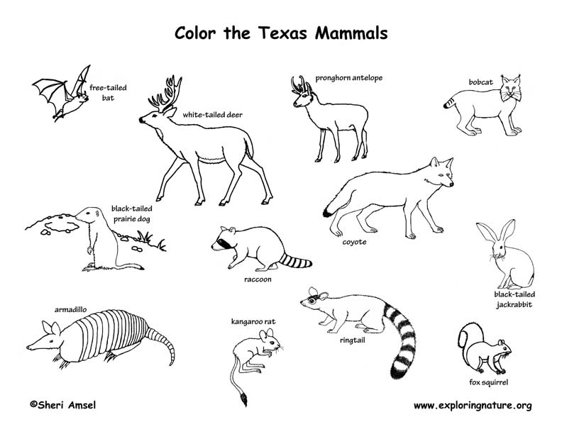 mammals coloring pages - photo#4