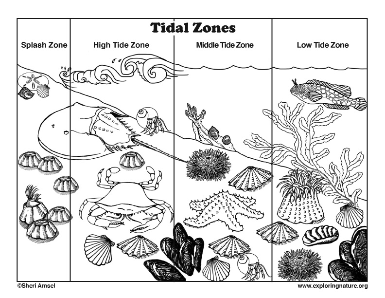 Tidal Zones Coloring Page