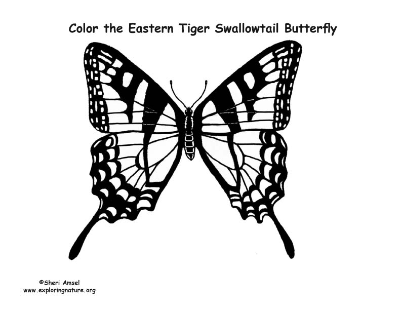 butterfly  eastern tiger swallowtail  coloring page