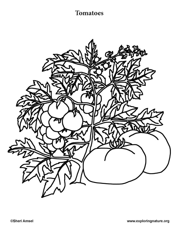 Garden Vegetables Coloring Pages 10