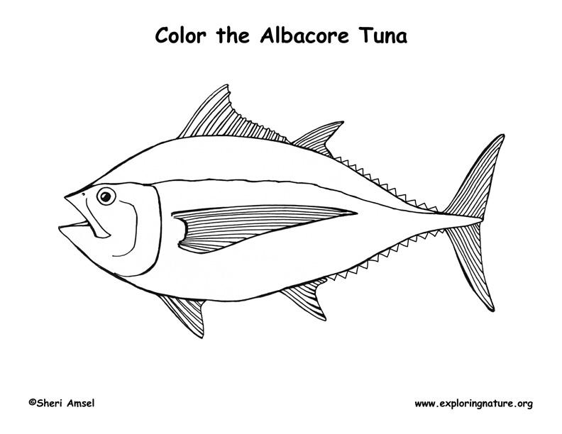 Tuna albacore coloring page for Tuna fish coloring page