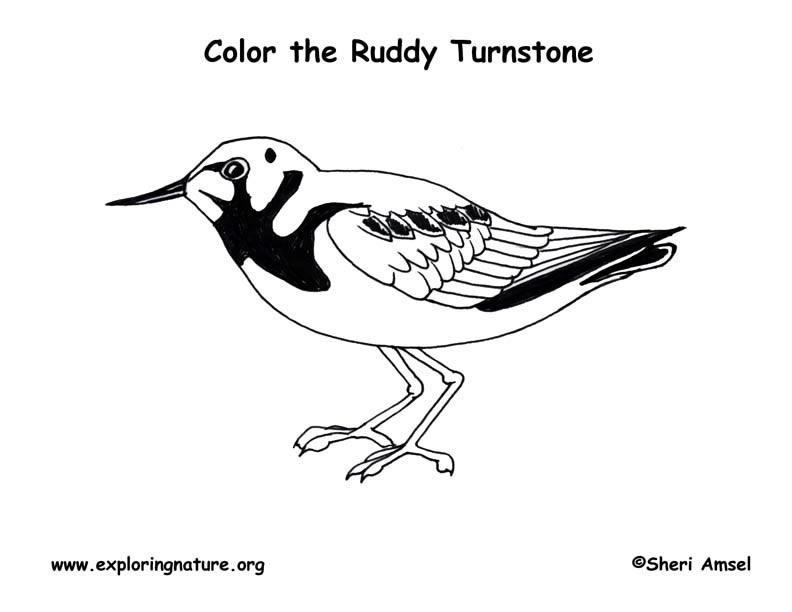 preschool exploring nature coloring pages - photo#25