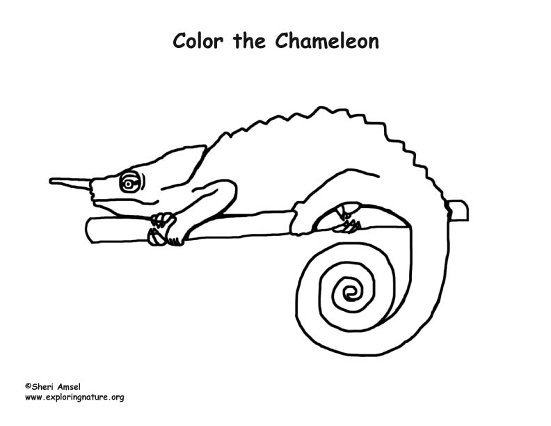 Wood Turtle Coloring Page