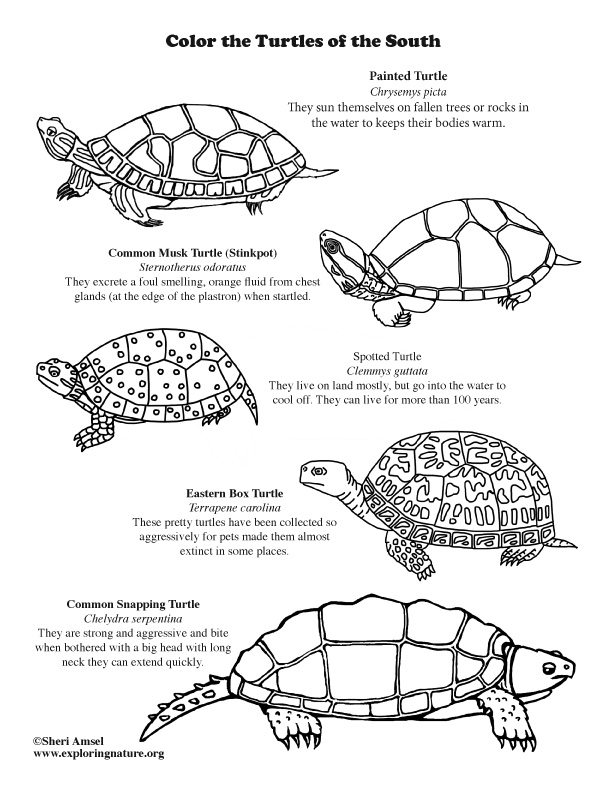 Turtes of the South Coloring Page