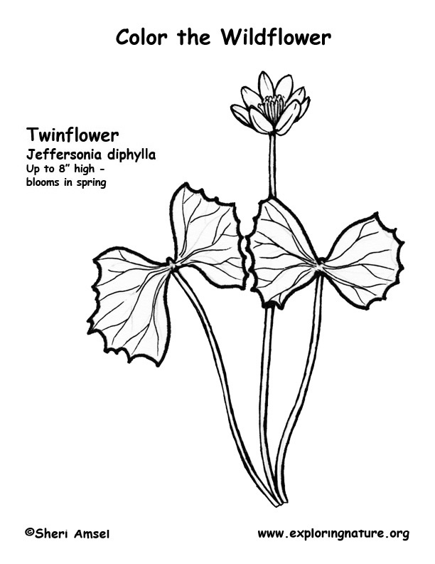 Twin Flower Coloring Page