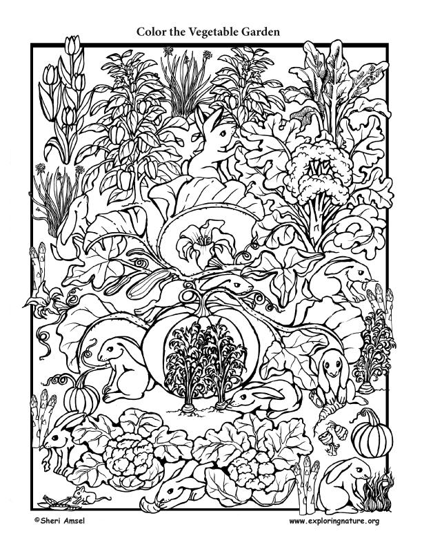 Vegetable Garden Coloring