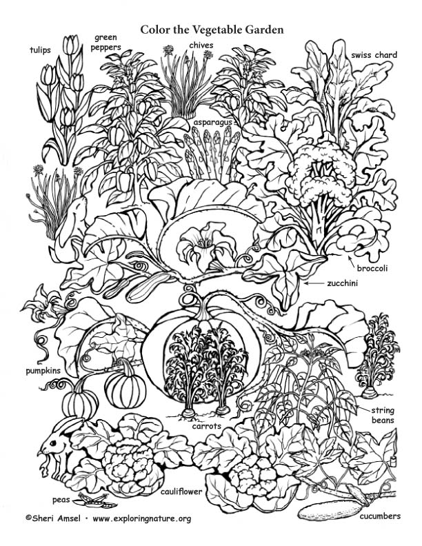 Vegetabe garden Coloring page
