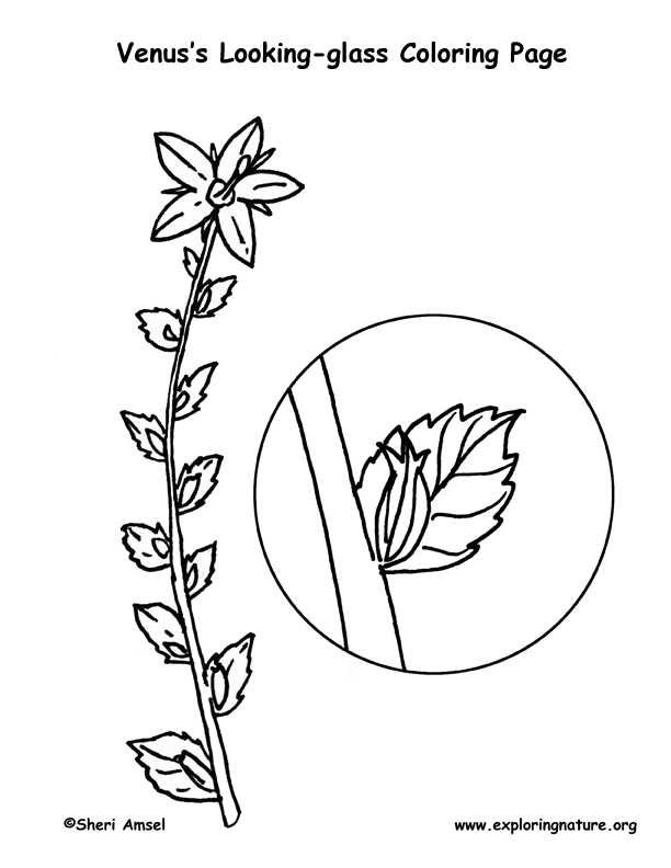 Venus Looking-glass Coloring Page