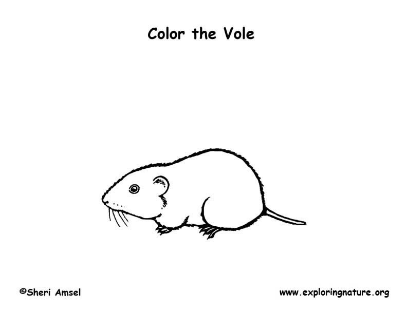 Vole Coloring Page