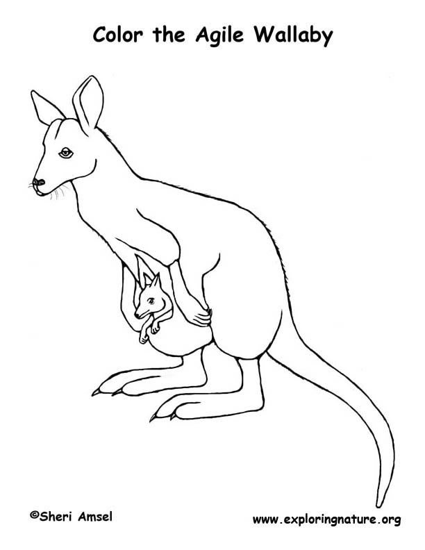 mammals coloring pages - photo#30