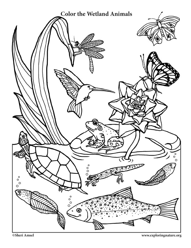 Color the smiling wetland animals for Animal habitat coloring pages