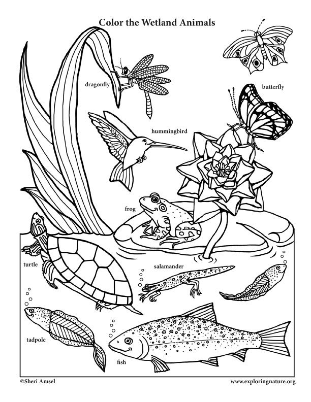 smiling wetland animals coloring page. Black Bedroom Furniture Sets. Home Design Ideas