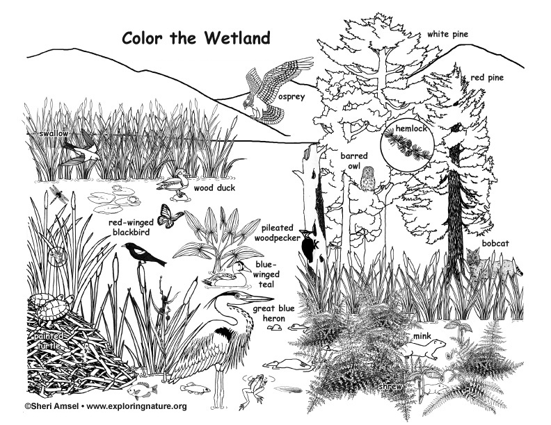 Coloring Pages Swamp Animals : Wetland coloring page