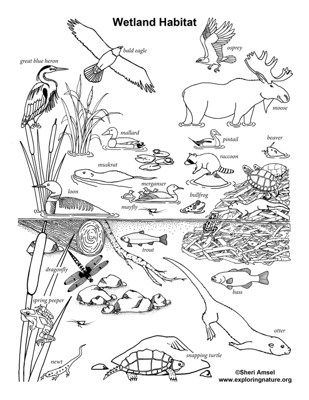 80+ [ Coloring Pages Of Wetland Animals ] - Grassland ...