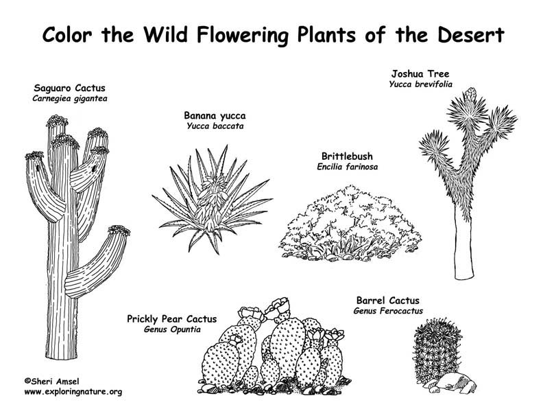 desert flowering plants coloring page - Plants Coloring Pages