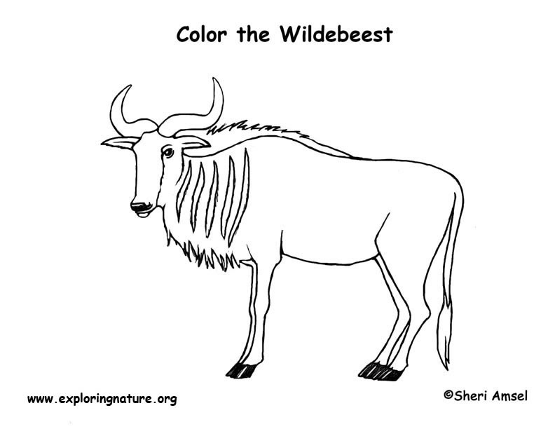 wildebeest coloring page