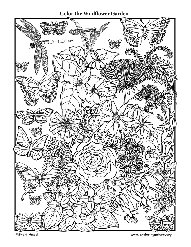 Wildflower Garden Coloring