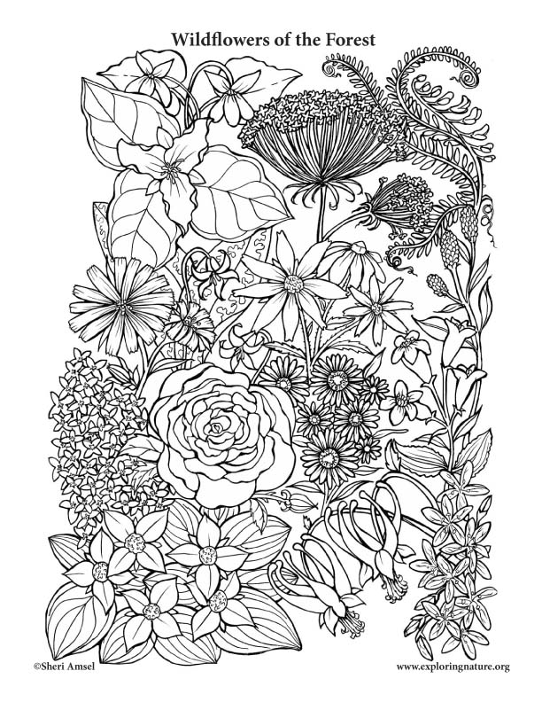 Wildflowers of the Forest Coloring Page
